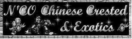N'Co Chinese Cresteds & Exotics